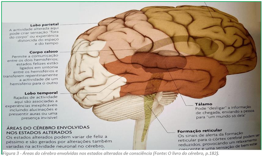 Áreas do cérebro envolvidas nos estados alterados de consciência