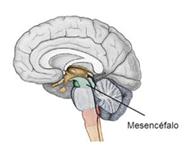 localização de brainspots